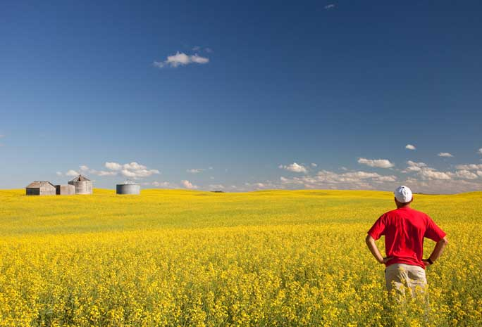 farmer looking at field
